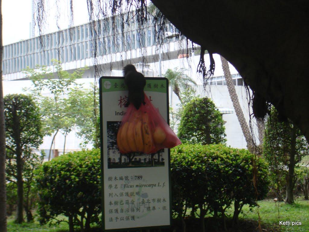MyTaiwan DSC00277